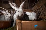 Cuidados de higiene necessários para a criação de coelhos