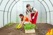 Modelo ideal de estufa para a agricultura orgânica