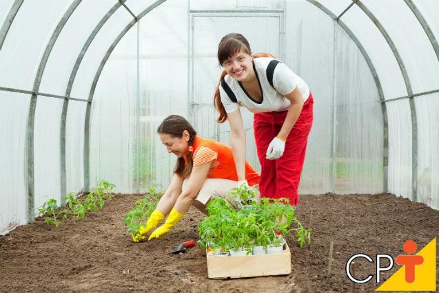 Modelo ideal de estufa para a agricultura orgânica   Artigos Cursos CPT