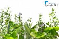 Qual a importância da secagem de plantas medicinais?