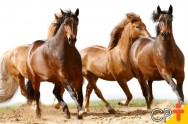 Psicomotricidade equestre: saiba mais sobre como lidar com cavalos