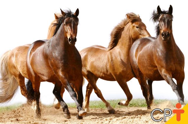 Psicomotricidade equestre: saiba mais sobre como lidar com cavalos   Artigos Cursos CPT