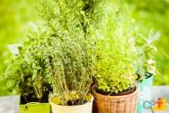 Dicas para fazer uma mini-horta na sua casa