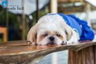 É viável criar cachorros em apartamento?