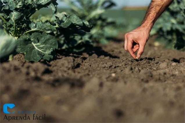 Semente sendo plantada