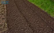 Como deve ser a limpeza e a adubação para cultivar pupunha?