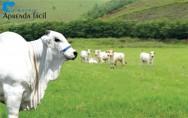 3ª Edição do Livro Manejo de Pastagens na Pecuária de Corte. Vem ver!