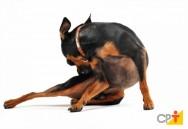 Insetos que atacam cães