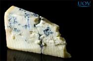 Principais defeitos dos queijos