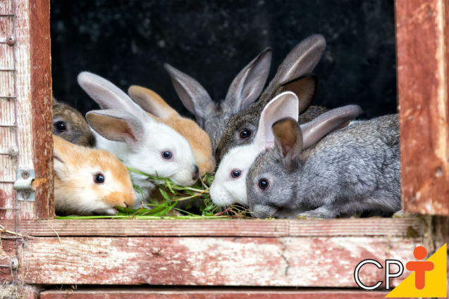 Fezes de coelhos servem de esterco?   Dicas Cursos CPT