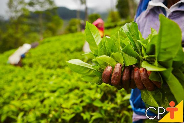 Plantas medicinais e condimentares: para quem vender?   Artigos Cursos CPT