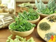 Como armazenar plantas medicinais após a colheita?
