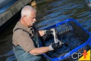A temperatura da água é importante para o crescimento dos peixes?