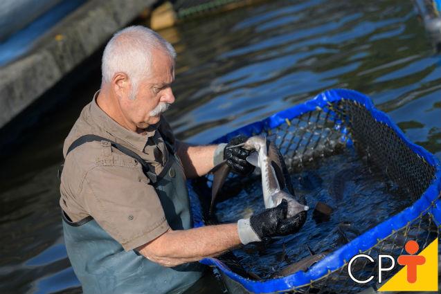 A temperatura da água é importante para o crescimento dos peixes?   Artigos Cursos CPT