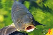Como classificar peixes de acordo com sua cadeia alimentar?