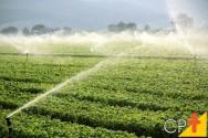 Aspersores de irrigação: saiba tudo sobre eles