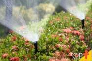 Dicas para um projeto de irrigação eficiente