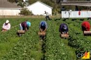 Principais riscos relacionados ao trabalho rural