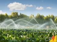 Lavouras produtivas dependem de uma boa irrigação