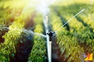 Importância da qualidade da água para irrigação