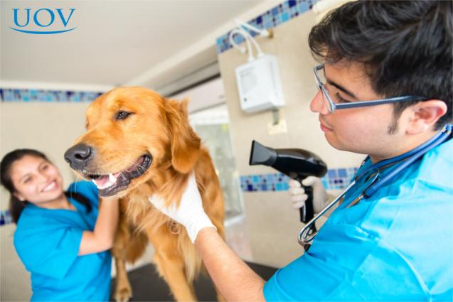 Cão após o banho no petshop