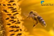 O que é o pólen?