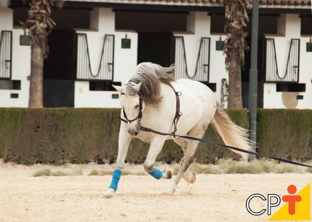 Comunicação: chave do sucesso na doma racional de cavalos   Dicas Cursos CPT