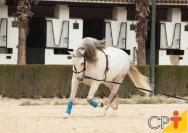 Comunicação: chave do sucesso na doma racional de cavalos