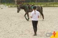 Doma racional de cavalos: duração dos treinos