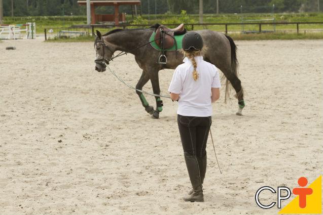 Doma racional de cavalos: duração dos treinos   Artigos Cursos CPT