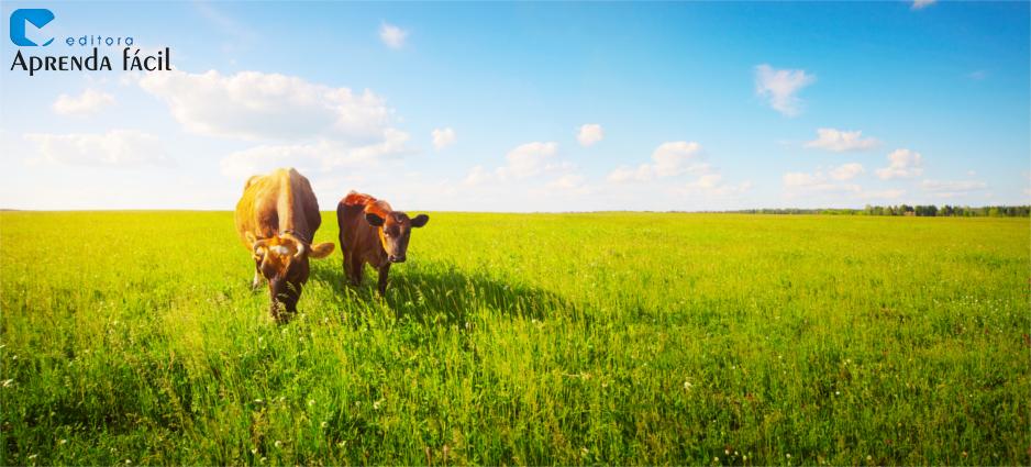 Vacas comendo no pasto