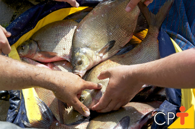 Peixes em cativeiro necessitam da vitamina C para sobreviver?   Artigos Cursos CPT