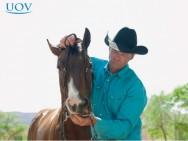 Como usar as mãos para conduzir o cavalo