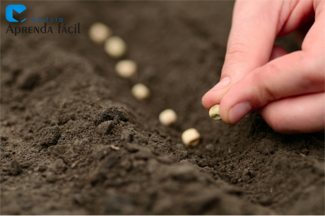 Sementes sendo plantadas