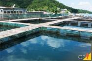 Quais são os sistemas de criação de peixes?