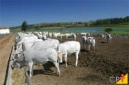 Entendendo o manejo alimentar de animais confinados