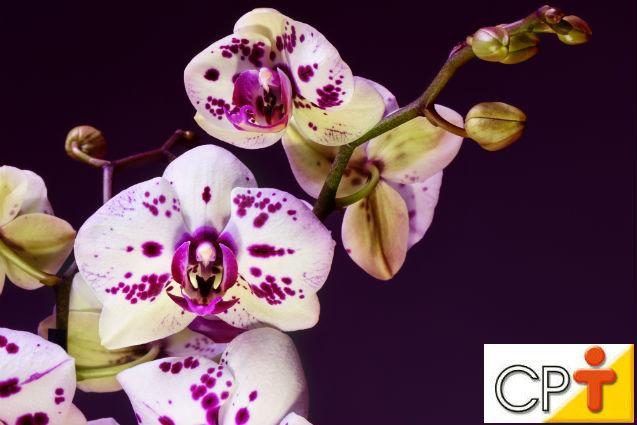 Ganhou uma orquídea? Aprenda a cuidar dela!   Artigos Cursos CPT