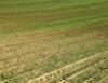 Análise deve ser feita antes da escolha da técnica para a recuperação do solo