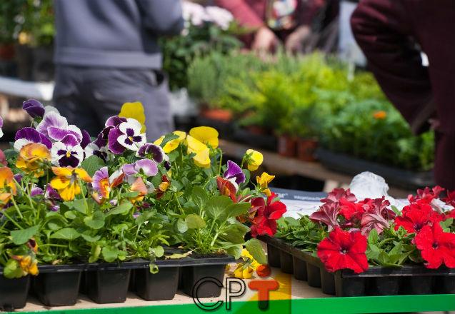 Produção de mudas de flores e plantas ornamentais cresce no Brasil   Notícias Cursos CPT