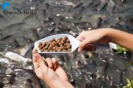 Qual deve ser a composição das rações para peixes?