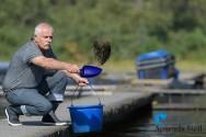 Conhecendo o sistema digestivo para a produção da melhor ração para peixes