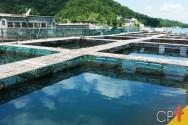 Conheça os sistemas de criação de peixes