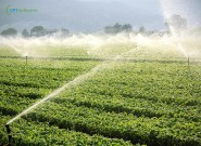 Vantagens e desvantagens dos principais tipos de irrigação