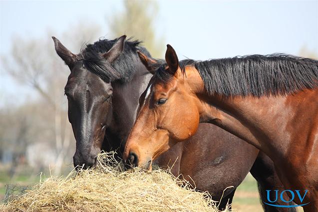 Criação de Cavalos