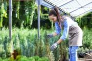 Jardinagem e paisagismo: transplantio de mudas