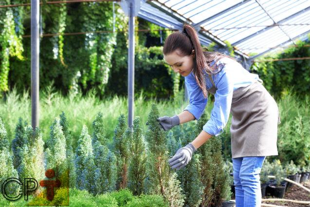 Jardinagem e paisagismo: transplantio de mudas   Artigos Cursos CPT