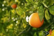 Brasil integra Sistema de Aplicação de Padrões Internacionais de Frutas e Hortaliças da OCDE