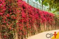 Jardins verticais: dicas para a correta escolha das plantas