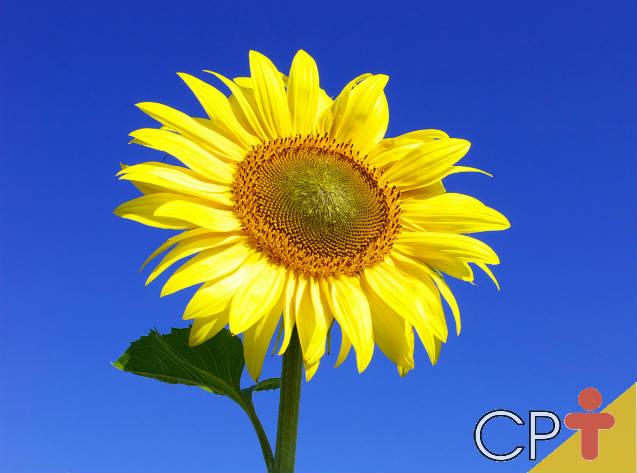 Descubra os benefícios do óleo vegetal para a saúde e a beleza