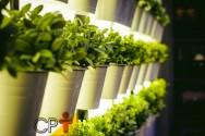 Parede verde comestível: com quais plantas montar